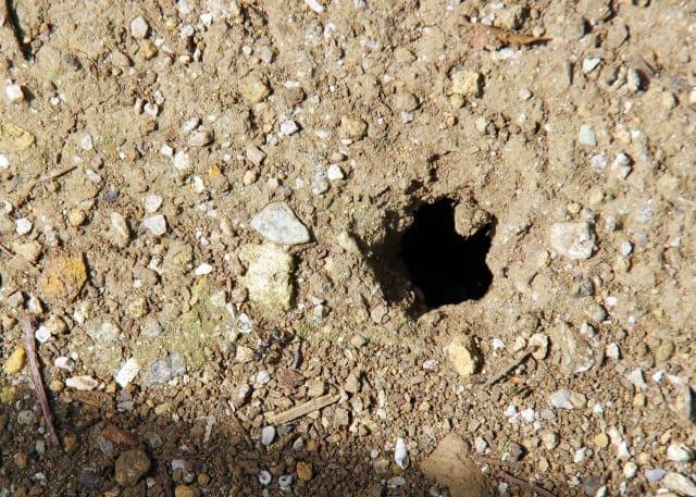 arinokujo3 家の中に蟻が入ってくる原因と駆除方法!侵入経路を断ち巣を丸ごと退治する方法とは