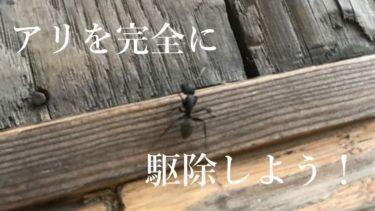 家の中に蟻が入ってくる原因と駆除方法!侵入経路を断ち巣を丸ごと退治する方法とは