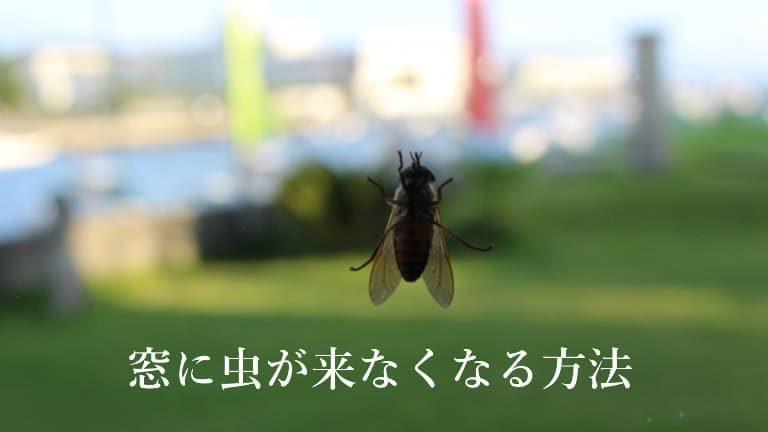 窓に虫が来ない方法!虫が窓に寄って来る全ての原因を排除できるフルコースとは