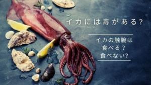 イカには毒がある?イカの触手触腕は食べる、食べない?